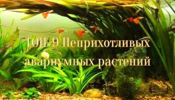 Неприхотливые аквариумные растения: ТОП-9 для начинающих