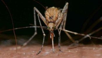 5 способов защиты от комаров