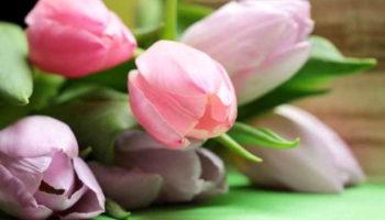 7 советов, как продлить жизнь букету тюльпанов