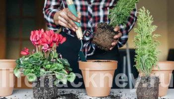 Полезный чай для комнатных растений