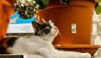 25 безопасных комнатных растений для кошек