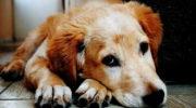 Чем нельзя кормить собаку: 11 запрещенных продуктов