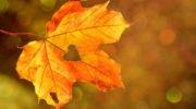 10 дел, которые нужно сделать осенью в доме