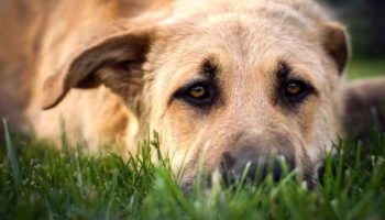 Как понять собаку: язык тела питомца