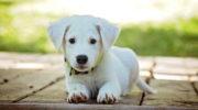 Как правильно воспитать собаку – 7 золотых правил