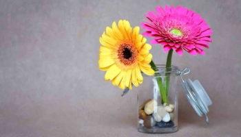 18 советов, как продлить жизнь срезанным цветам в вазе