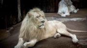 ТОП-5 самых дорогих животных в мире