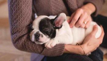 Советы по уходу за собакой в домашних условиях