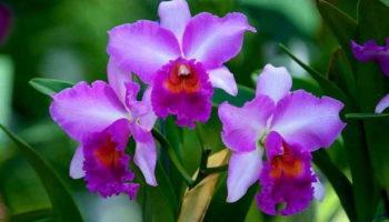 7 удивительных фактов об орхидеях