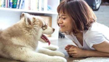 10 лучших пород собак для семьи с детьми