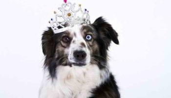 Странные привычки владельцев животных: 10 причуд