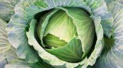 Заготовка капустных листьев: для голубцов и не только
