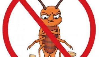 Эффективные способы уничтожения тараканов в квартире