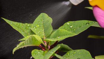 Применяем растительные настои против тли