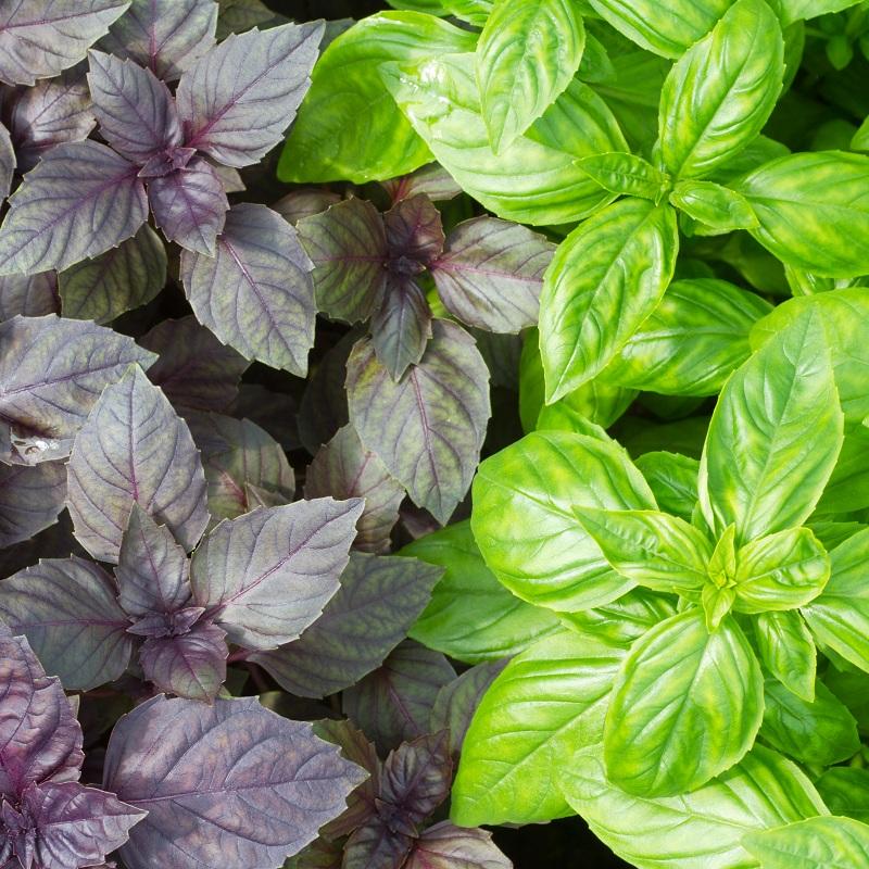Как правильно выбрать зелень и как ее правильно мыть?
