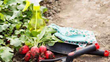 Август — время не только собирать урожай, но и сажать. Рассказываю, что я сажаю в этот период