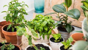 Богатство и процветание в дом принесут: топ 5 комнатных цветов