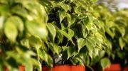 Благоприятное воздействие цветов на микроклимат в доме