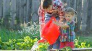 Распространённые вредители огурцов: меры борьбы и профилактики