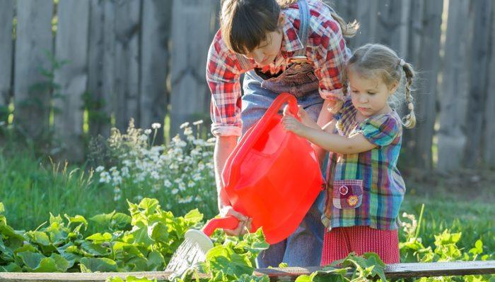 Подкормка от пожелтения листьев огурцов, которая найдется в каждом доме