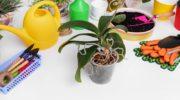 В чем причины высыхания и выглядывания из горшка корней орхидей?