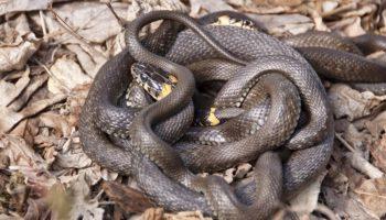 Способы избавления от змей на участке