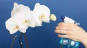 Как правильно обрезать орхидею после цветения: основные правила