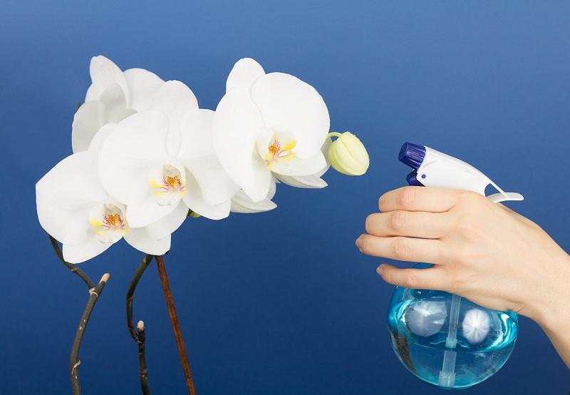 Приготовление и применение настоя из чеснока для орхидей