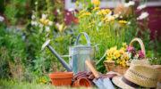 Лучшие соседи для растений, способные увеличить их урожайность