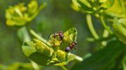 Садовые муравьи: способы избавить от них участок