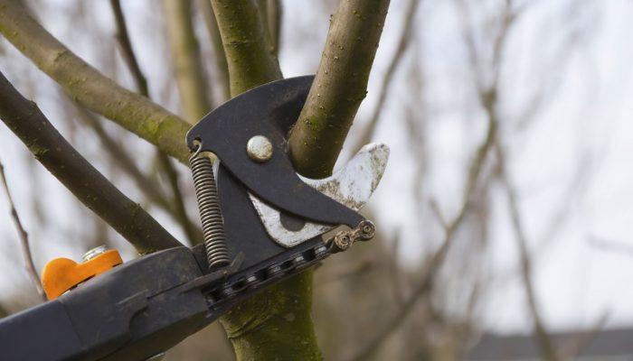 Правила обрезки фруктовых Деревьев — я их всегда соблюдаю и вам советую