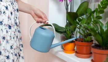 Можно ли обрезать замиокулькас и как омолодить растение