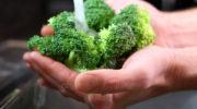 Как вырастить рассаду брокколи, цветной и брюссельской капусты
