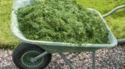 Можно ли мульчировать огурцы скошенной травой