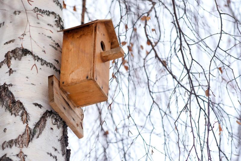 Как сделать скворечник для птиц