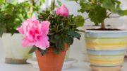Какие аптечные средства заставят цвести домашние растения