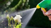 Водой горячей обливайся, если хочешь быть здоров: горячий душ для «зеленых питомцев»