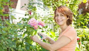 Ошибки, которые нельзя допускать при подготовке роз к холодной зиме