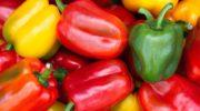 Магазинный болгарский перец: получаем бесплатные семена