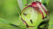 Эффективные и гуманные способы борьбы с муравьями на приусадебном участке