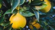 Какие экзотические растения можно вырастить из косточки плода, купленного в магазине