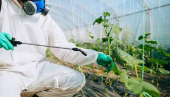Вредители огурцов: как избавиться