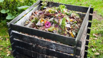 Яблоки и груши для удобрения: стоит ли использовать для компостной кучи? Делюсь наблюдениями