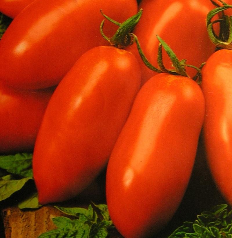 Урожайный томат Каспар F1: что учесть при выращивании