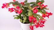 Правила использования удобрений для подкормки комнатных растений