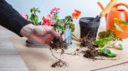 Как правильно подготовить домашние растения к зиме