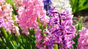 Многолетние и однолетние садовые цветы, которые предпочитают расти в тени