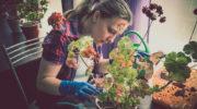 Комнатная герань (пеларгония): обрезка, которая преобразит цветок