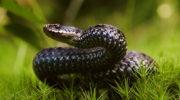 Как избавиться от нехороших соседей — прогоняем змей с участка