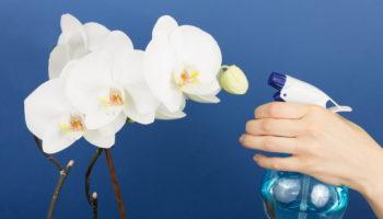 Орхидея Фаленопсис: условия ухода и возможные ошибки. Защита от болезней и вредителей